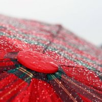 Зонтик :: Александра Перфильева