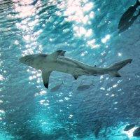 Сытая акула! Смешно, но факт! :: Mikhail Afanasev