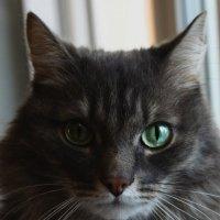 Глаза - зеркало души :: Vika Chistilina