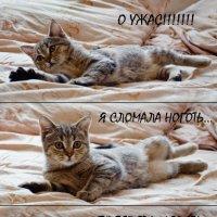 моя Мия :: Galinka Pashenko