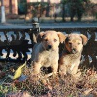 Уличные щенята :: Remian Mad