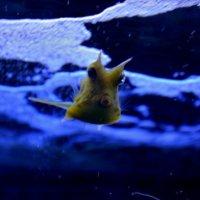 Fish horse :: Dinar Shartdinov