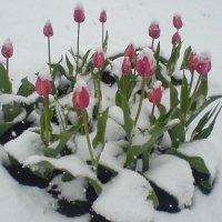 весна :: Катерина Коханова