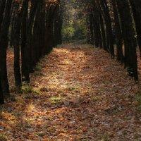 Осенний лес :: Vika Chistilina