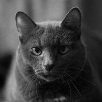 Cat :: Михаил ***