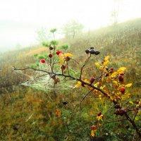 Шиповник в тумане... :: Владимир Уваров