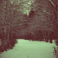 Winter Forest :: Натали V