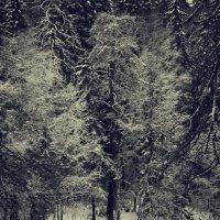 Δάσος Χειμώνας :: Натали V