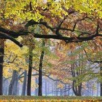 """Осень в парке """"Александрия"""" :: Елена Боржковская"""