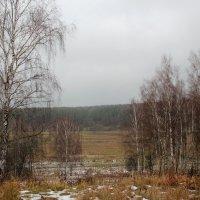 И снова ноябрь... :: Ирина Терентьева