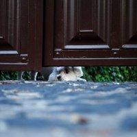 Осторожно, злая собака :: Ксения Барышева