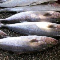 Рыба на базаре в г. Фетхие :: Людмила Якимова