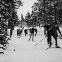 Лыжники :: Victor Lysenko