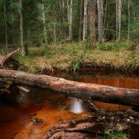 В лесу :: Екатерина Тумовская