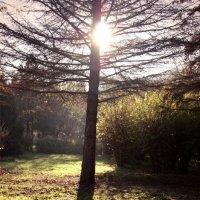 Magic tree :: Юлия Тригуб