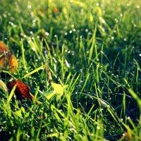green grass :: Юлия Тригуб