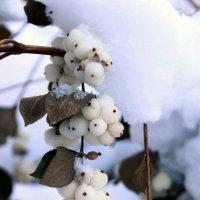 сейчас под снегом :: Vika Chistilina