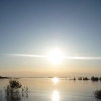 Река Амур :: Наталья Пупышева