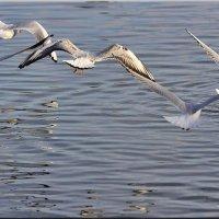 Полет над водой :: Ирина Таболина