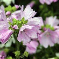 Цветок :: Ольга Новикова