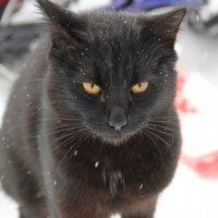 Бездомный кот :: Алексей Бойко