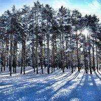 зима ... :: Vadim Zharkov