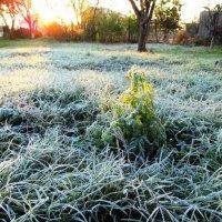 Утро 16 ноября ... :: AV Odessa