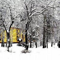 Зимняя гравюра :: игорь козельцев