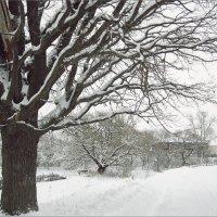 Графика зимы... :: Лена L.