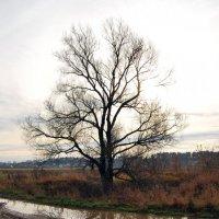 Просто дерево и лужа :: Андрей Дмитренко