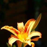 Цветы :: Wiktor Kowalow