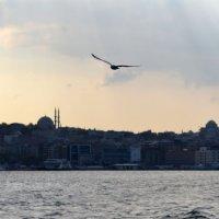 Чайка над Босфором :: Alexander Zzz...