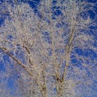 Красавица зима :: Мария Косторева (Орлова)