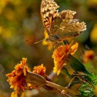 бархатный нектар :: Ирэна Мазакина