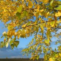 Золотая осень :: Ольга Виноград