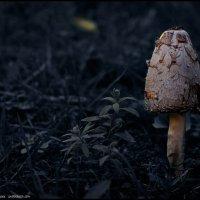 Гриб, грибок :: DR photopehota