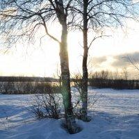 Солнце в плену :: Вера Покровская
