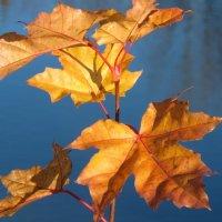 Осенние листья :: Олег Попков