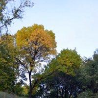 краски октября.. :: Светлана Давыдова