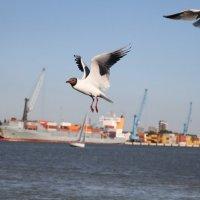 чайка в порту :: Alexandra Mustafaeva