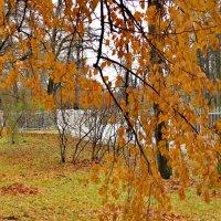 Поздняя осень :: Олег Попков