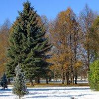 Первый снег ( осень 2012 ) :: Олег Попков