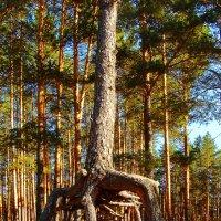 Я из лесу вышел на мир посмотреть :: Альберт Беляев