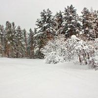 зимний лес :: Сергей Бурнышев