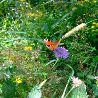 Бабочка :: Марина Чернякова