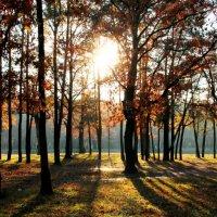 осенее солнце :: Марина Воржева
