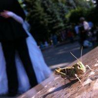 Кузнечик на свадьбе) :: Болат Срымов