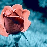 Sinful Flower :: Олег Ионичев