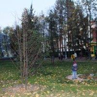 Мальчик в осеннем сквере :: Наталья Золотых-Сибирская