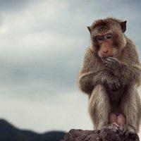 остров обезьян :: Антон Лихач